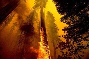 Bomberos luchan para proteger de las llamas a las inmensas secuoyas en California
