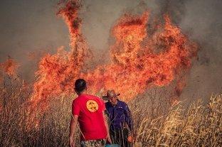Una ONG pide a Santa Fe que denuncie al gobierno de Entre Ríos por las quemas -