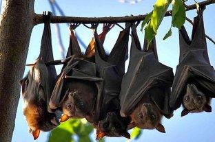 Científicos descubren un virus muy similar al del coronavirus en murciélagos de Laos