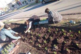 Santo Domingo: inician la plantación de los primeros ejemplares producidos en el vivero comunal