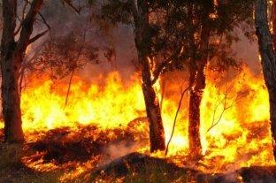 Cuatro provincias registraron incendios forestales activos en sus territorios