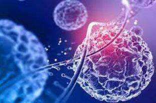 Envejecimiento celular: un complejo enzimático podría detenerlo