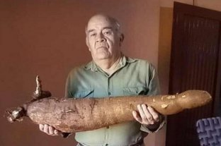 Cosecharon una mandioca gigante en Corrientes
