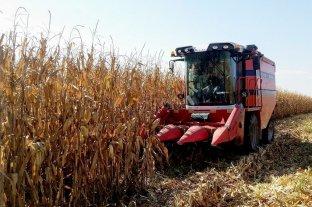 La soja y el maíz disponibles cerraron estables en Rosario