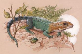 Descubrieron un lagarto que vivió hace unos 84 millones de años en la Patagonia