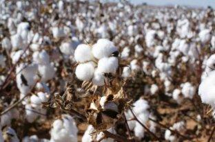 """Gestionan venderle a Vietnam algodón """"marca Santa Fe"""""""