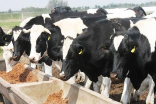Destacan el trabajo federal para liberar exportaciones de vaca conserva a China