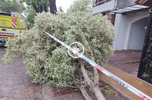 Video: el temporal de viento dejó varios árboles caídos en las calles de Venado Tuerto