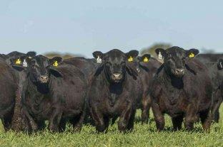 Villa Cañás: sacrificaron tres toros que invadieron un campo vecino