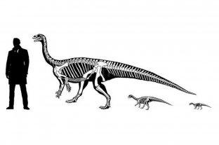 Científicos del Conicet lograron registrar el comportamiento social de una especie de dinosaurio
