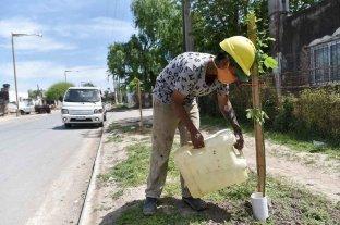 """Plantan unos 400 árboles """"al pie"""" de obras ejecutadas en la ciudad de Santa Fe"""