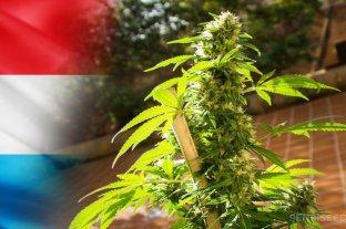 En Luxemburgo se legalizó la producción y el consumo de cannabis en el hogar,