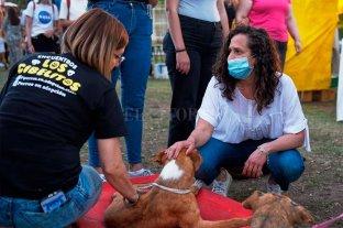 Santa Fe Adopta: familias santafesinas se sumaron a la iniciativa solidaria -