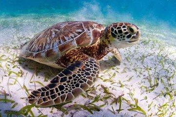Al menos cuatro personas murieron en Madagaskar por consumir carne de tortuga marina