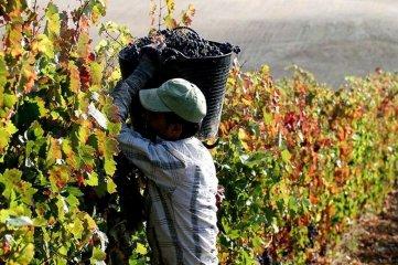 Trabajadores viñateros serán beneficiados tras la aprobación de dos leyes