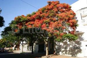 En santa fe se plantar n rboles cada a o el for Arboles de hojas perennes para veredas