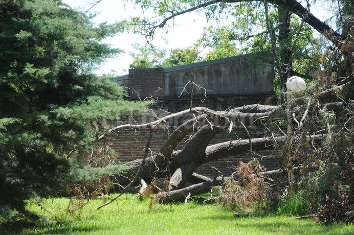 A un mes de la tormenta que azotó a la ciudad, todavía quedan restos de ramas y árboles caídos en varios puntos de la ciudad. Luis Cetraro